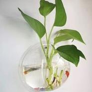 亚克力墙面鱼缸挂件 有机玻璃墙壁鱼缸